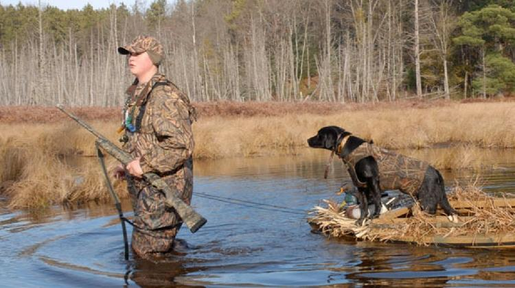 dog-hunting-gear-feature
