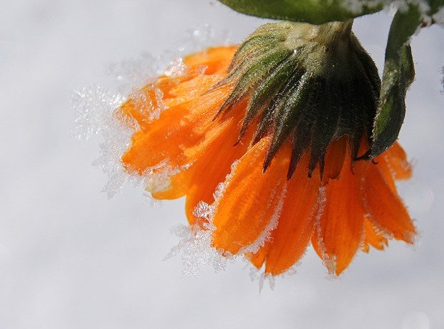 Winter Gardening and Homesteading   Winter Storm Survival: How to Stay Warm and Survive the Cold