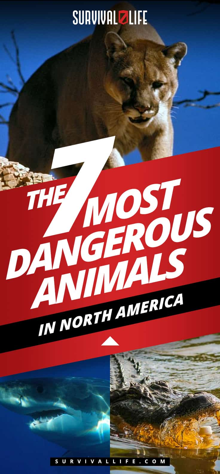 The 7 Most Dangerous Animals In North America