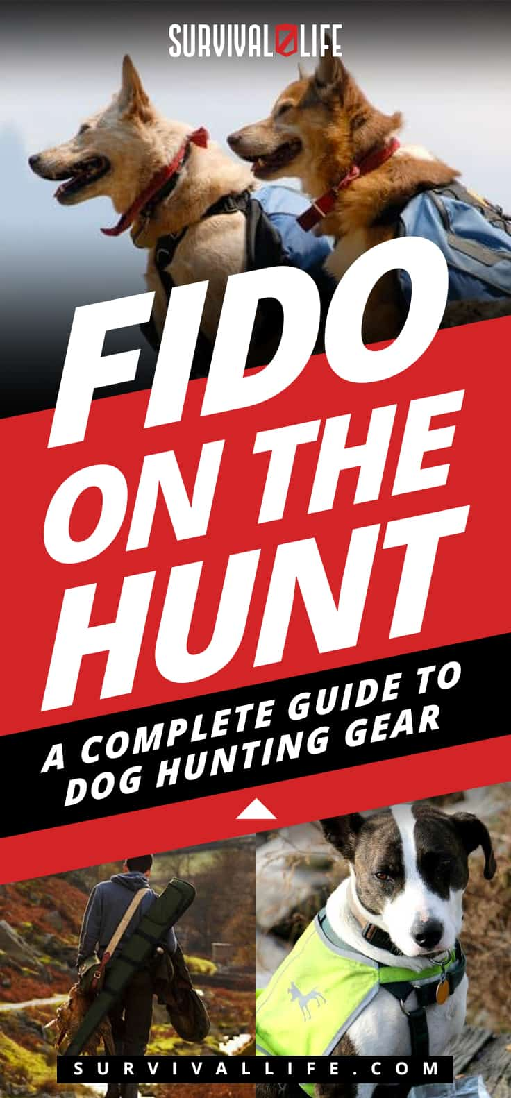Fido On The Hunt: A Complete Guide To Dog Hunting Gear | https://survivallife.com/fido-on-the-hunt-a-complete-guide-to-dog-hunting-gear/