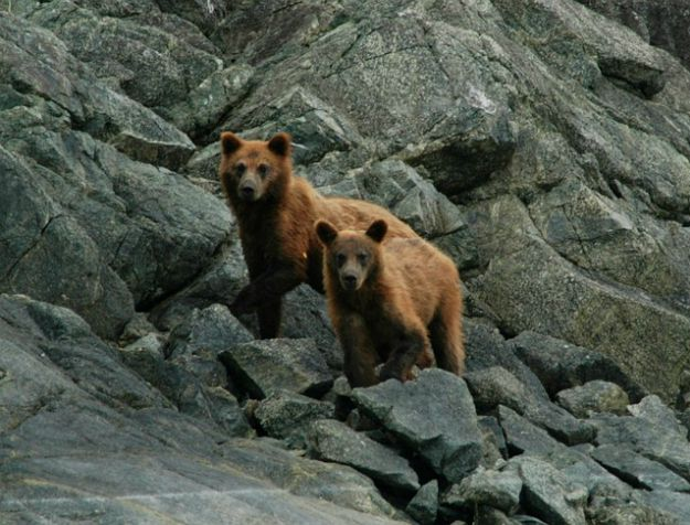 Tip #3: Don't be a Bear Magnet | Bearly Alive - How To Survive A Bear Attack