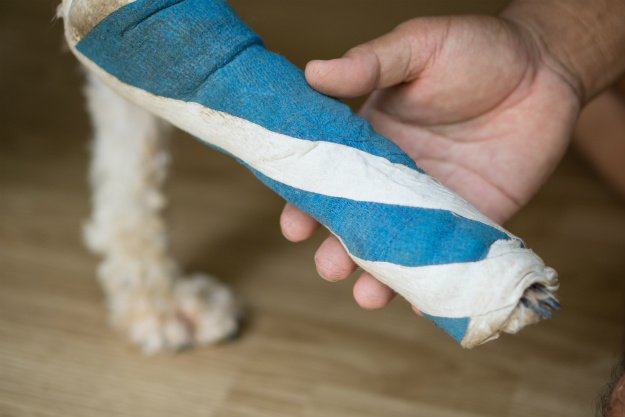 dog-leg-wrapped Dog First Aid Kit For Your Canine Companion
