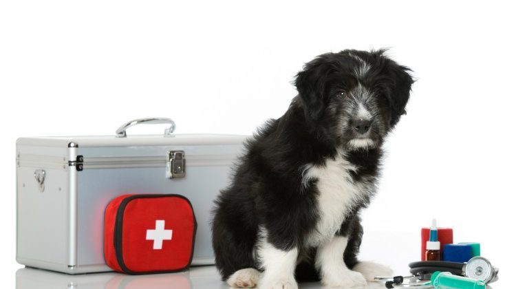 dog-with-first-aid-kit