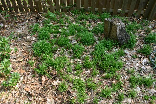 garden weeds | Preparing Your Spring Garden Now | It's Never Too Early!