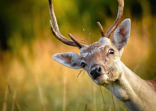 Deer's Vision   Deer Hunting Guide: Can These Animals See Orange Vests?