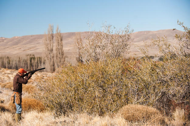Hunt in an open land | Practical Quail Hunting Tips Every Hunter Should Follow