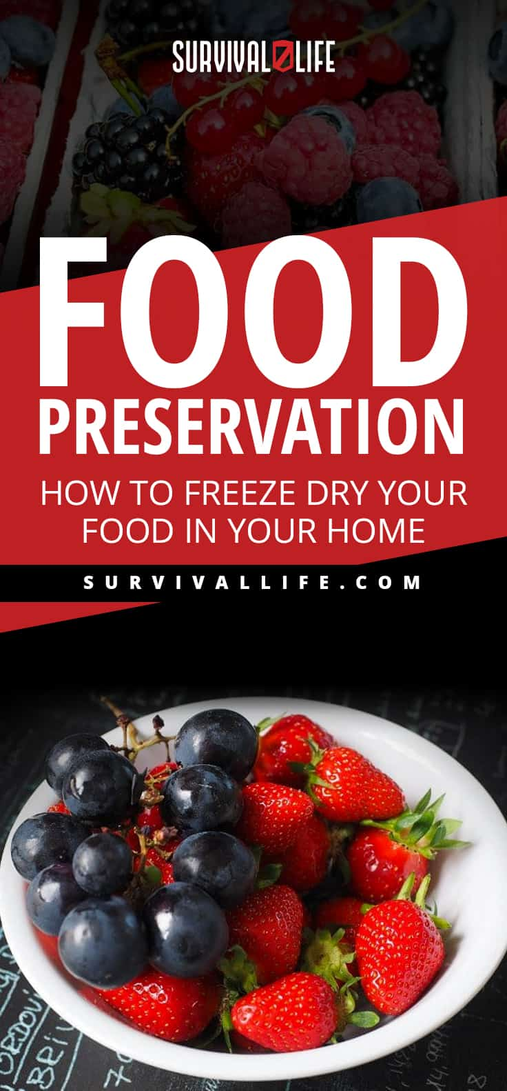 Food Preservation | How To Freeze Dry Your Food In Your Home