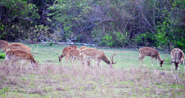 A Story of Personal Survival | Survival Lessons From The Field deer in field