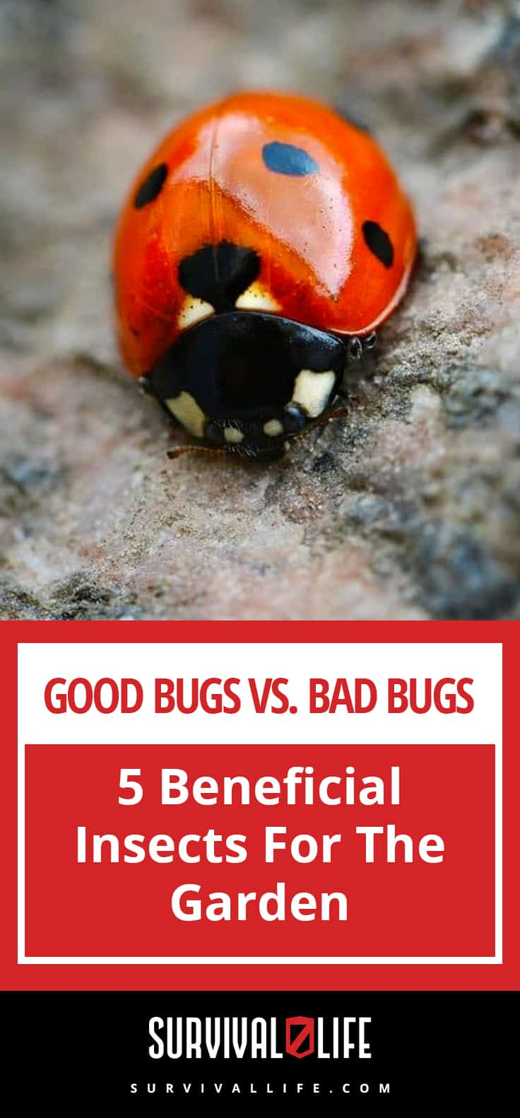 5 Beneficial Insects For The Garden: Good Bugs Vs. Bad Bugs