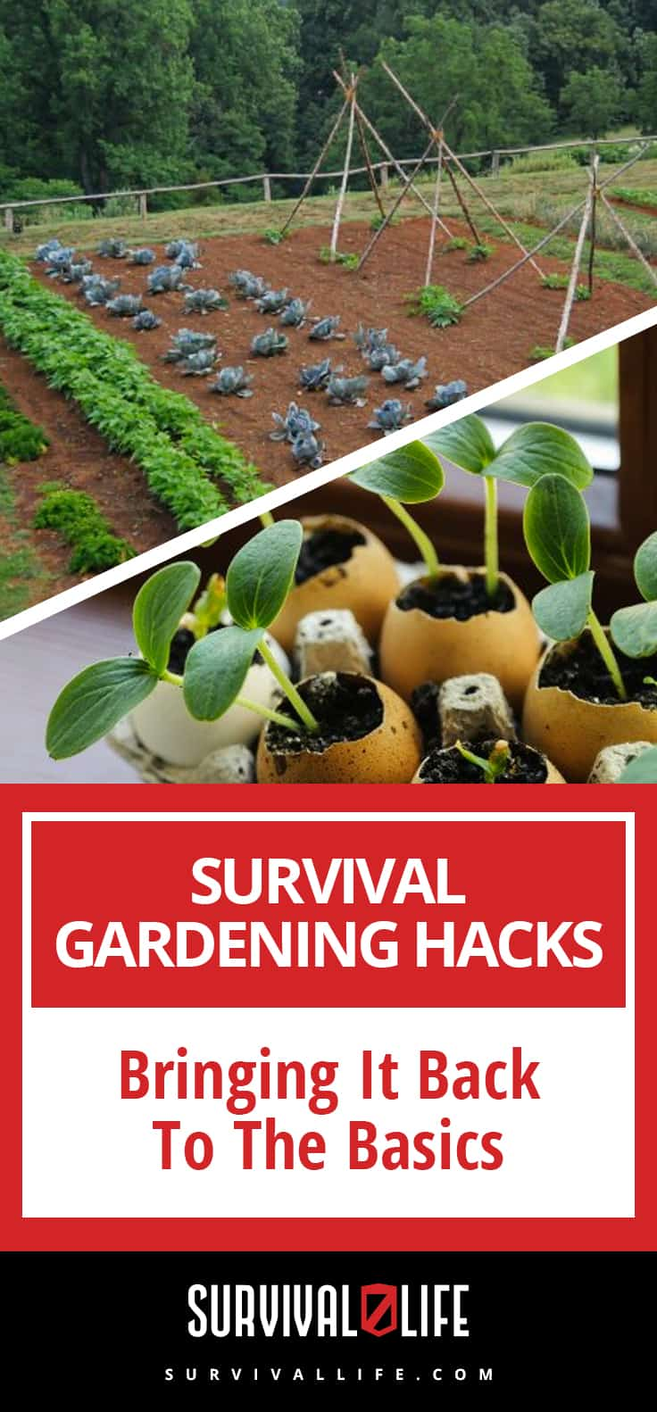 Survival Gardening Hacks | Bringing It Back To The Basics | https://survivallife.com/survival-gardening-hacks-basics/