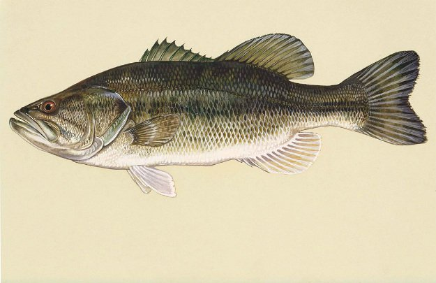 Hook, Line and Sinker! Springtime Fishing Tips You Need To Know river largemouth