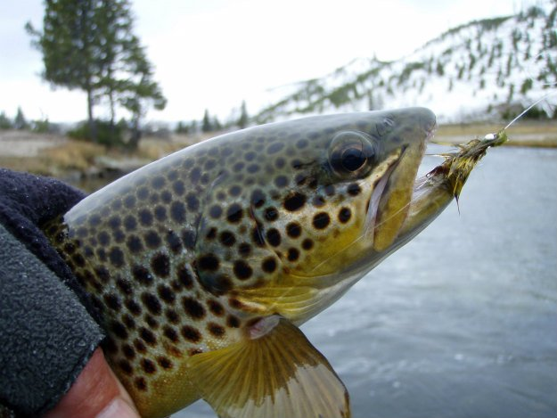 Hook, Line and Sinker! Springtime Fishing Tips You Need To Know trout