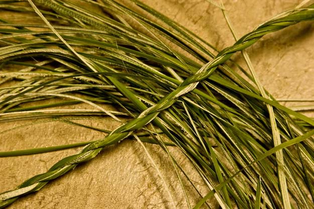 Cordage | Cattails Survival Uses