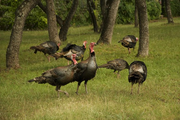 Spring Gobblers | Turkey Hunting For The Warm Weather Hunter