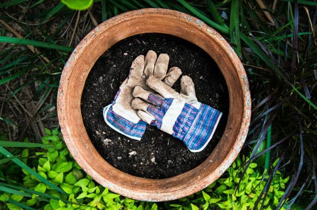Check out 12 Budget Friendly Must-Haves For Every Beginner Gardener at https://survivallife.com/budget-friendly-must-haves/