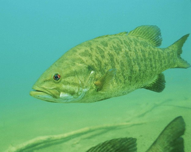 Hook, Line and Sinker! Springtime Fishing Tips You Need To Know lake smallmouth