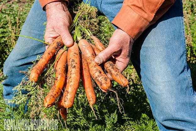 Carrots | 20 Survival Gardening Plants For Spring