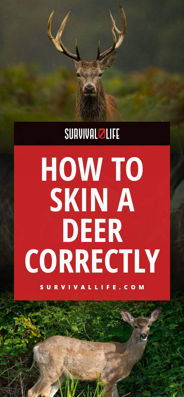 How To Skin A Deer Correctly
