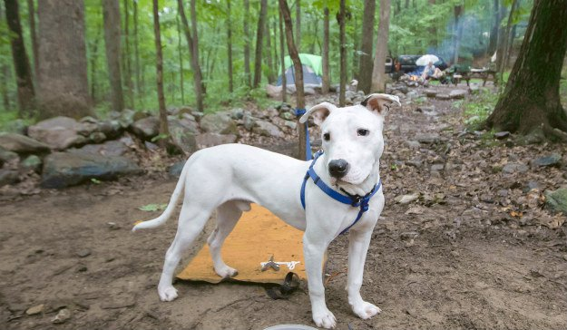 10 Must Have Items You Need When Hiking With Your Dog Leash