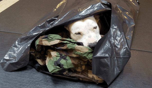Shelter or Outer Garment | Survival Uses For A Contractor's Trash Bag