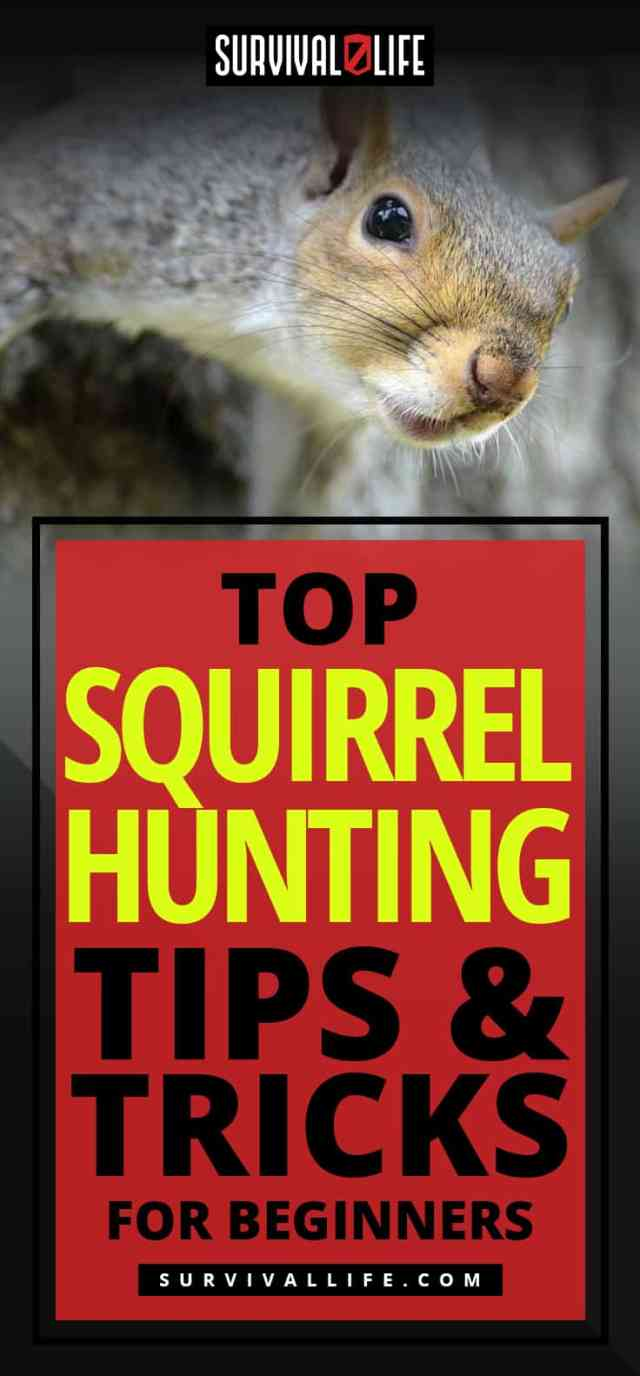 Placard | Top Squirrel Hunting Tips And Tricks For Beginners