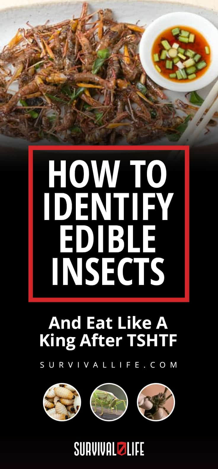 Edible Insects | How To Identify Edible Insects And Eat Like A King After TSHTF