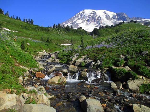 """Camping in Washington 