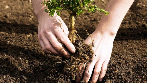 Plant More Trees   Tsunami Shelters   What You Need to Know