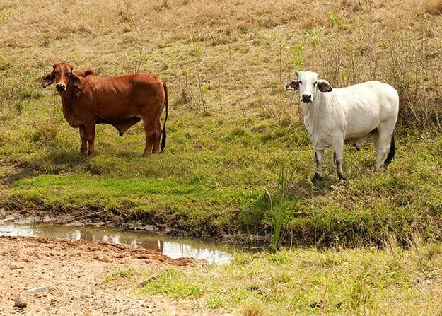 Consider the Climate | Tips for Raising Healthy Cattle