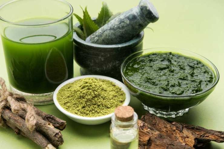 Medicinal Ayurvedic Azadirachta indica leaves | Ayurvedic Remedies for Better Health