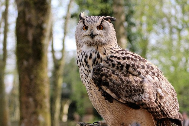 Owls | How To Identify & Stop The 8 Top Predators That Prowl Your Homestead
