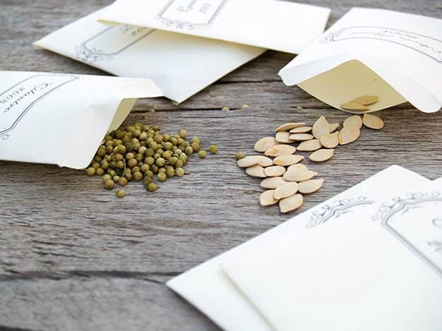 Select the right seeds to store | Disaster Proof Survival Seeds And How To Store Them