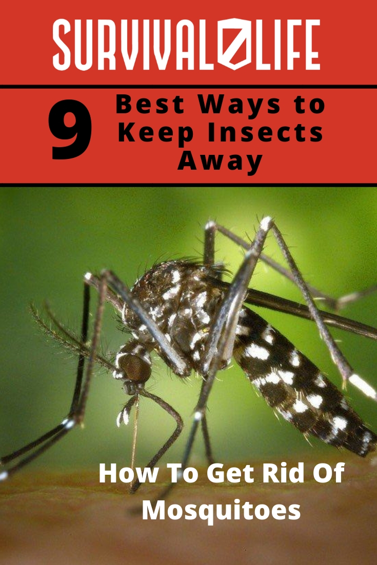 How To Get Rid Of Mosquitoes   Best Ways To Keep Insects Away   https://survivallife.com/get-rid-mosquitoes/