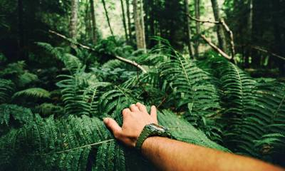Feature | Close up of explorer male hand in green rainy forest | Conquering The Cornerstones: Self-Defense - The 4th Pillar of Survival