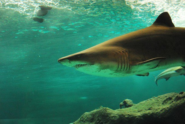 Be Wary of Shark Attacks | Lost At Sea Survival Guide | 7 Tips And Tricks