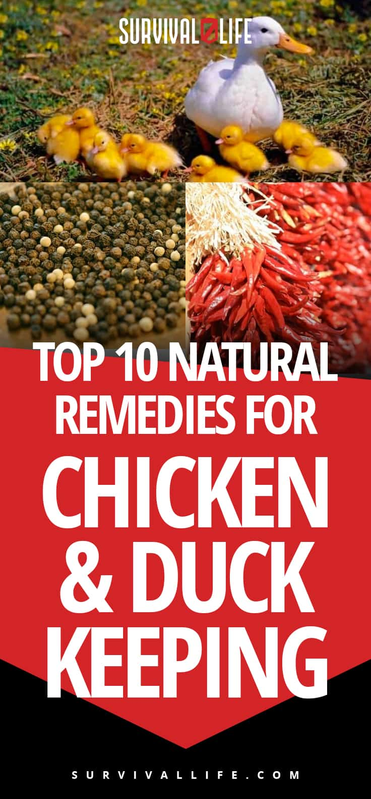 Chicken And Duck Keeping | Top Natural Remedies For Your Sick Flock | https://survivallife.com/chicken-and-duck-keeping/