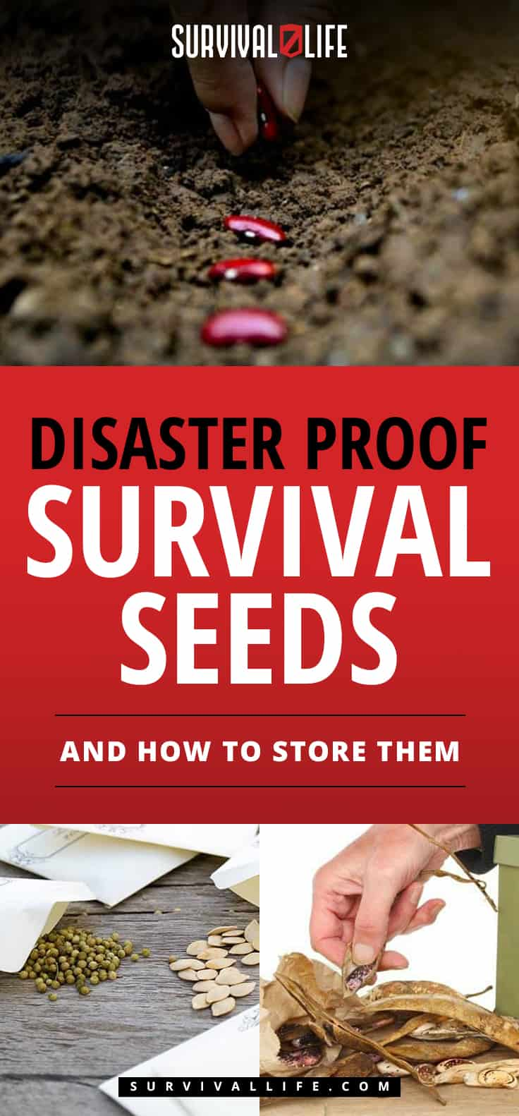 Survival Seeds | Disaster Proof Survival Seeds And How To Store Them