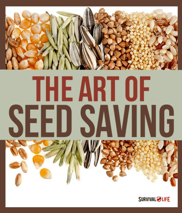 Know How to Save Seeds for Future Harvests | Important Self Sufficiency Skills To Learn | Homestead Skills