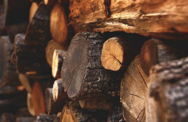 Identify Different Types of Wood for Your Fire | 25 Obscure Bushcraft Skills for Survival