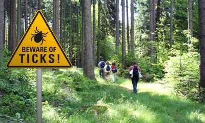 warning sign beware ticks infested area | Natural Tick Repellents to Get Rid of Ticks NOW | featured