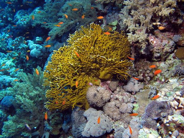 Fire Corals | Beach Animals To Watch Out For When On Vacation