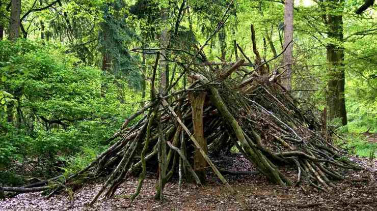 Forest shelter made from wood materials   Steps To Survive Anything