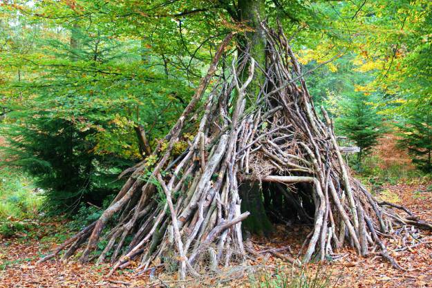 shelter made of woods   How to Survive in the Swamp   swamp survival tips