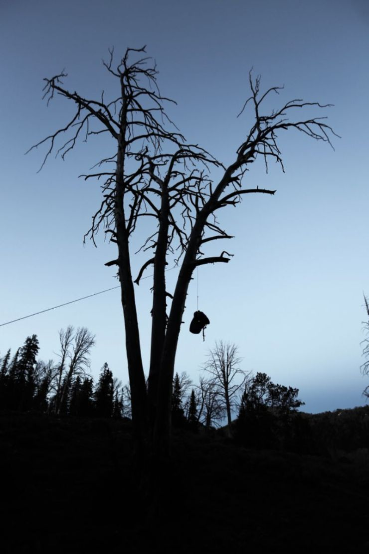 bear-bag-hanging-tree-backcountry-campsite | bearbag