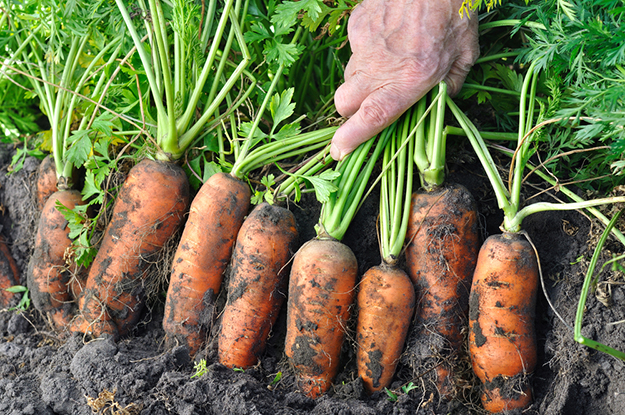 Grow Your Own Food for Survival | Urban Survival Skills To Master Before SHTF