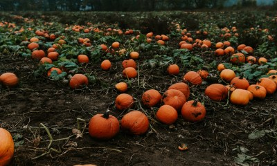 5 Unexpected Ways to Use Pumpkin in Survival
