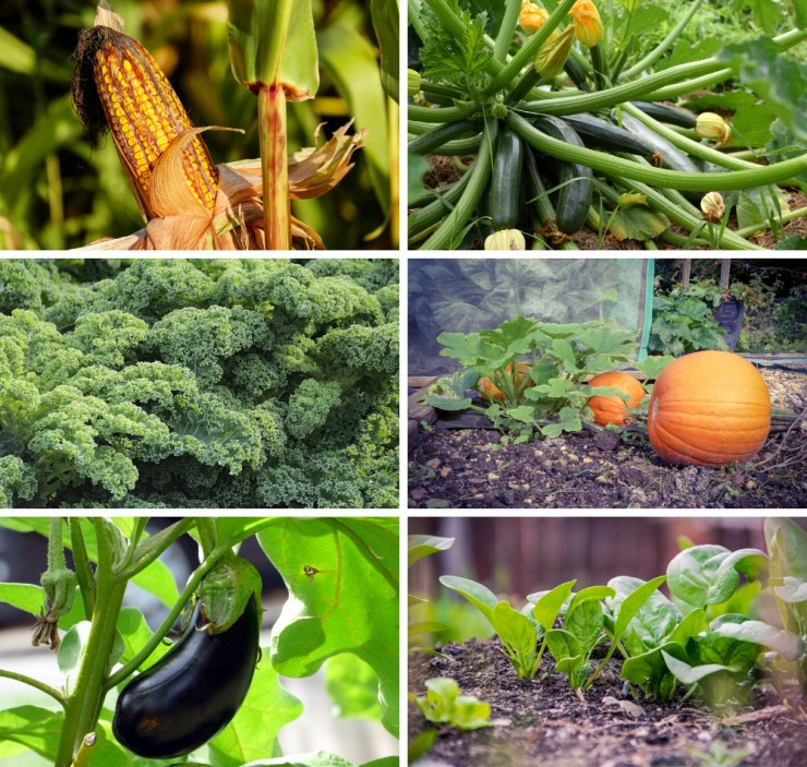Annuals | Best Plants for your Survival Garden