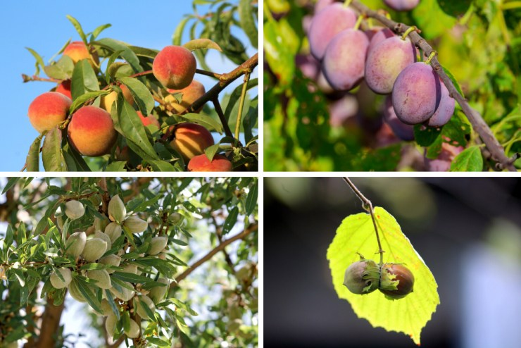 Fruit and Nut Trees | Best Plants for your Survival Garden