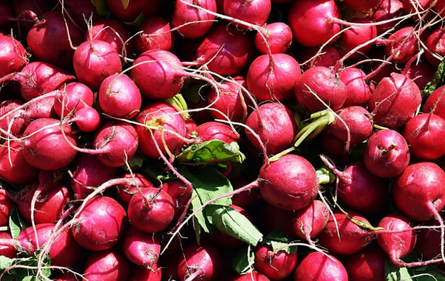 Radishes | Vegetables to Grow Now for a Quick Harvest | vegetable garden plants