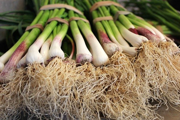 Spring Onions | Vegetables to Grow Now for a Quick Harvest | vegetable garden plants